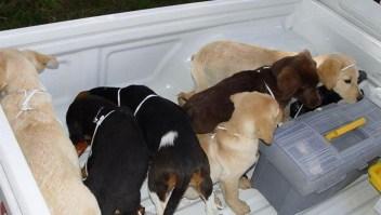 Condenado a 6 años por importar heroína en cachorros