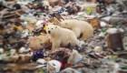 Un barrio invadido por osos polares
