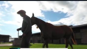 Esta empresa logró clonar 12 veces a un caballo