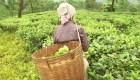 India: explotación de mujeres recolectoras de hoja de té