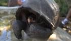 Ecuador encuentra una tortuga que se creía extinta hace 100 años