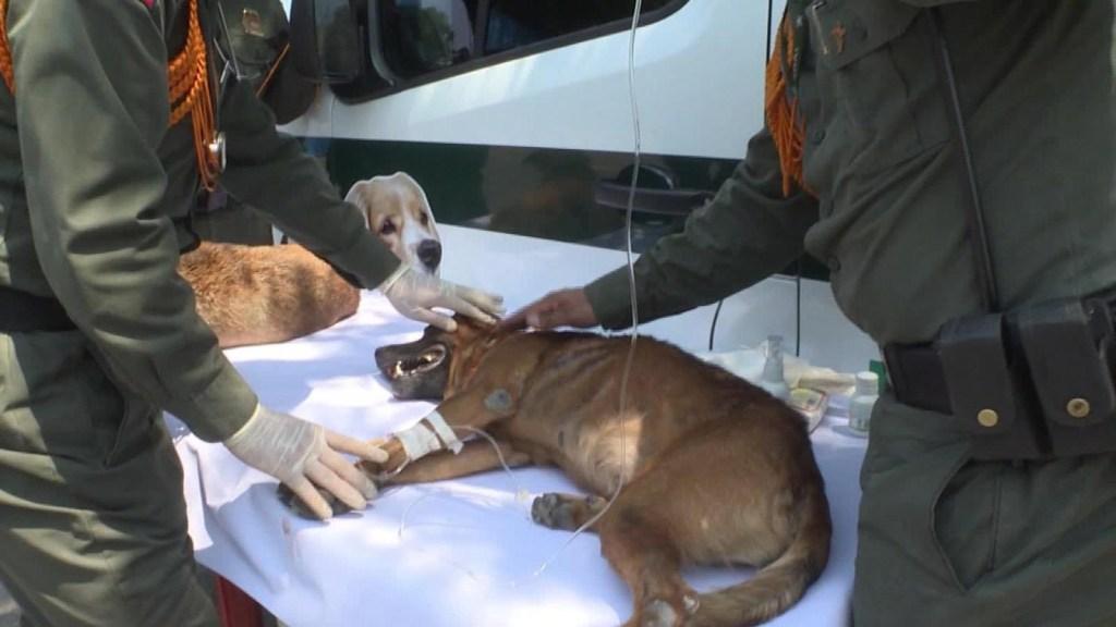 Perros abandonados sufren en la frontera entre Colombia y Venezuela