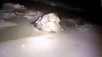 Policía rescata a perro atrapado en el hielo