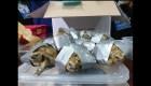 #ElDatoDeHoy: Encuentran tortugas en Filipinas