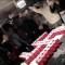 Condenan uso de temática nazi en fiesta de estudiantes