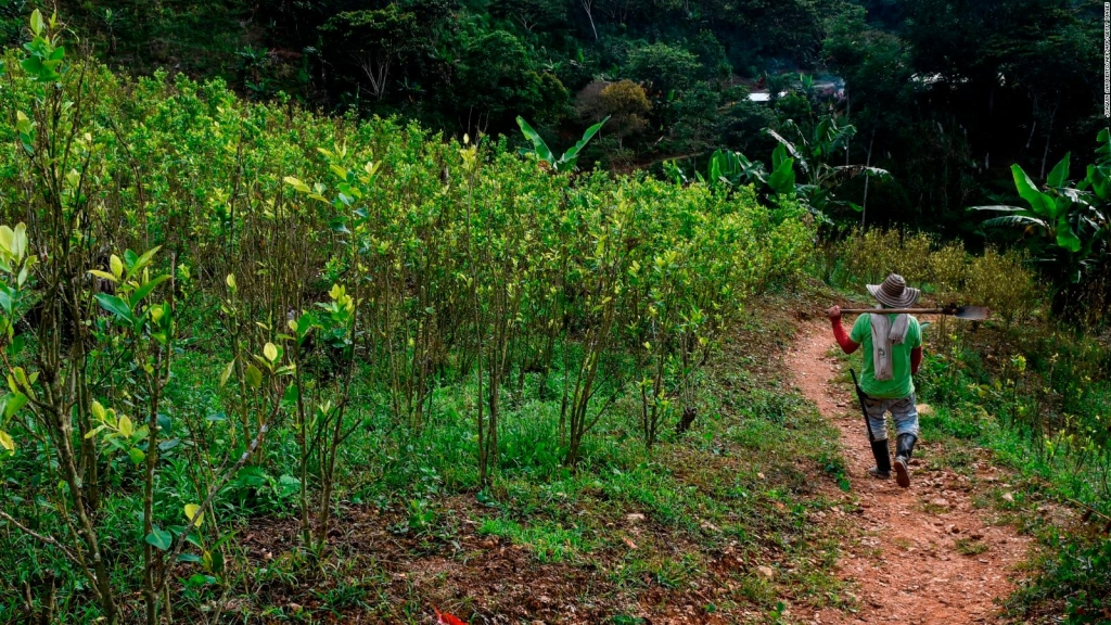 Aumenta el número de cultivos ilícitos en Colombia