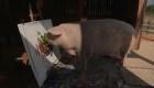 #LaImagenDelDía: un cerdo con sentido artístico
