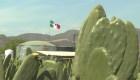 """A este cactus lo llaman """"el oro verde de México"""""""