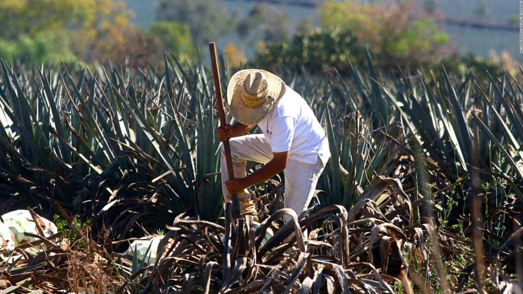 El tequila, más que una bebida para México