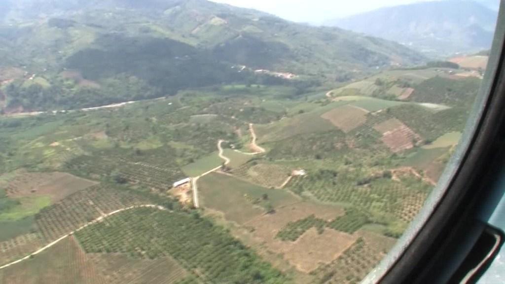 ¿Cómo erradican en Perú lo cultivos ilícitos?