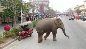 Un elefante se pasea a sus anchas por una ciudad en China