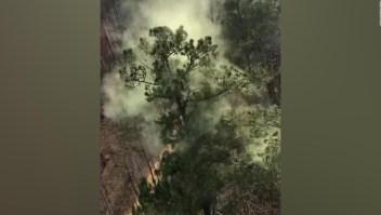Árboles desprenden nubes de polen
