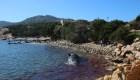 Un cachalote murió por la ingesta de plástico