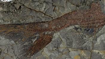 Asteroide que aniquiló a los dinosaurios formó estos fósiles