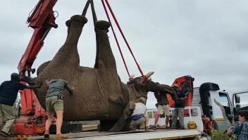 Indultan a elefante de pena de muerte