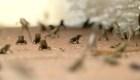 Florida: plaga de sapos invade comunidad