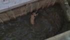 Rescatan a un perro que cayó de un puente