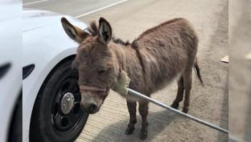 Un burro suelto en una autopista de Illinois