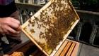 Estas abejas sobrevivieron al incendio de Notre Dame