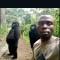 Gorilas posan en un selfi