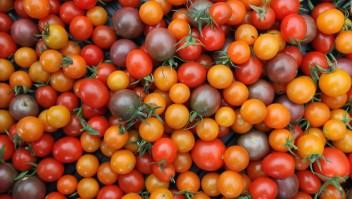 #CifraDelDía: El tomate podría costar hasta 85% más
