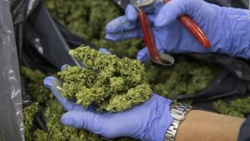 Crece el negocio del cannabis medicinal en Israel