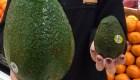 """""""Avozilla"""": este aguacate vale US$ 16 la unidad"""
