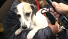 EE.UU. celebra el Día del rescate de perros