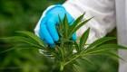 Usos y tratamientos medicinales del cannabis