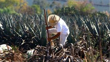 El tequila tiene un nuevo récord mundial