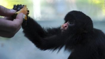 Un millón de especies están en peligro de extinción