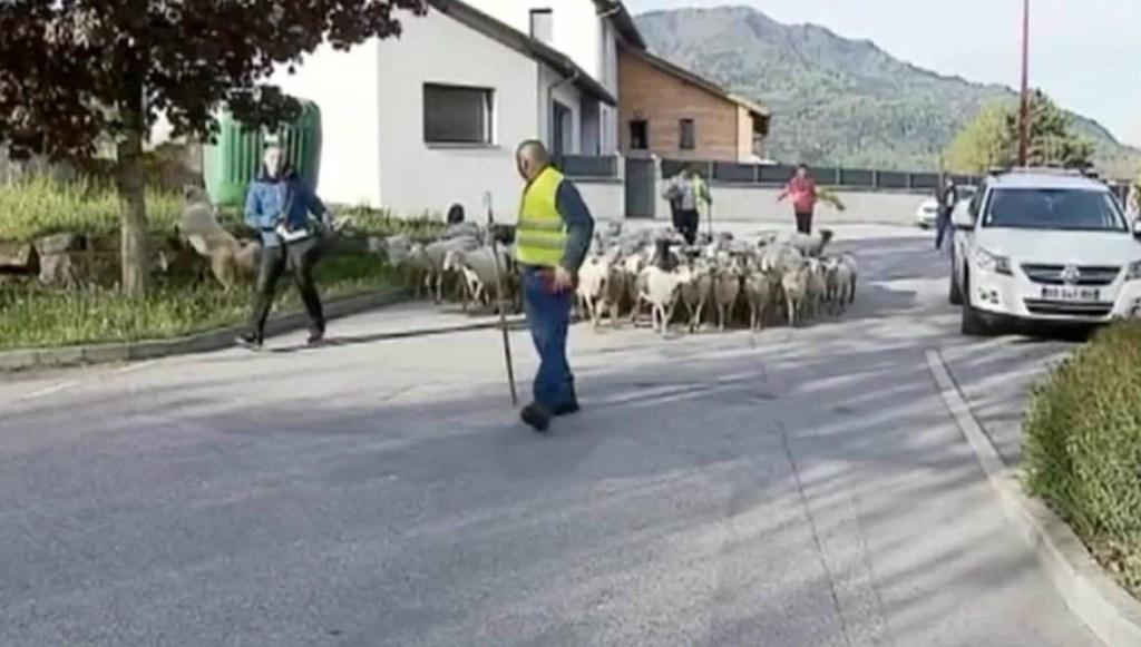 Escuela en Francia ve llegar a ovejas como alumnas