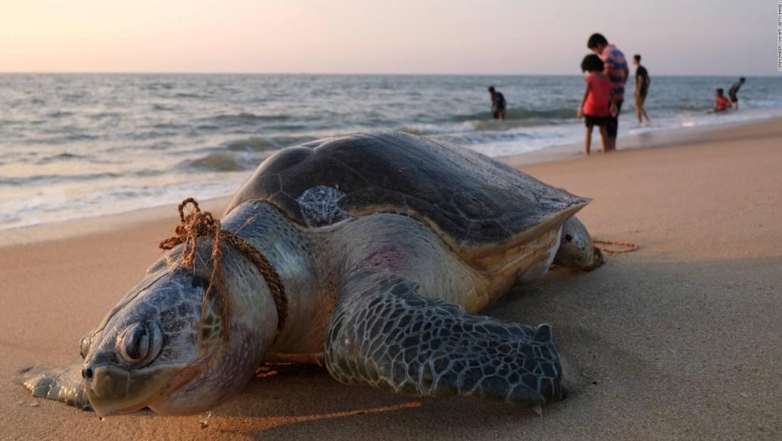 El plástico está matando a estos animales