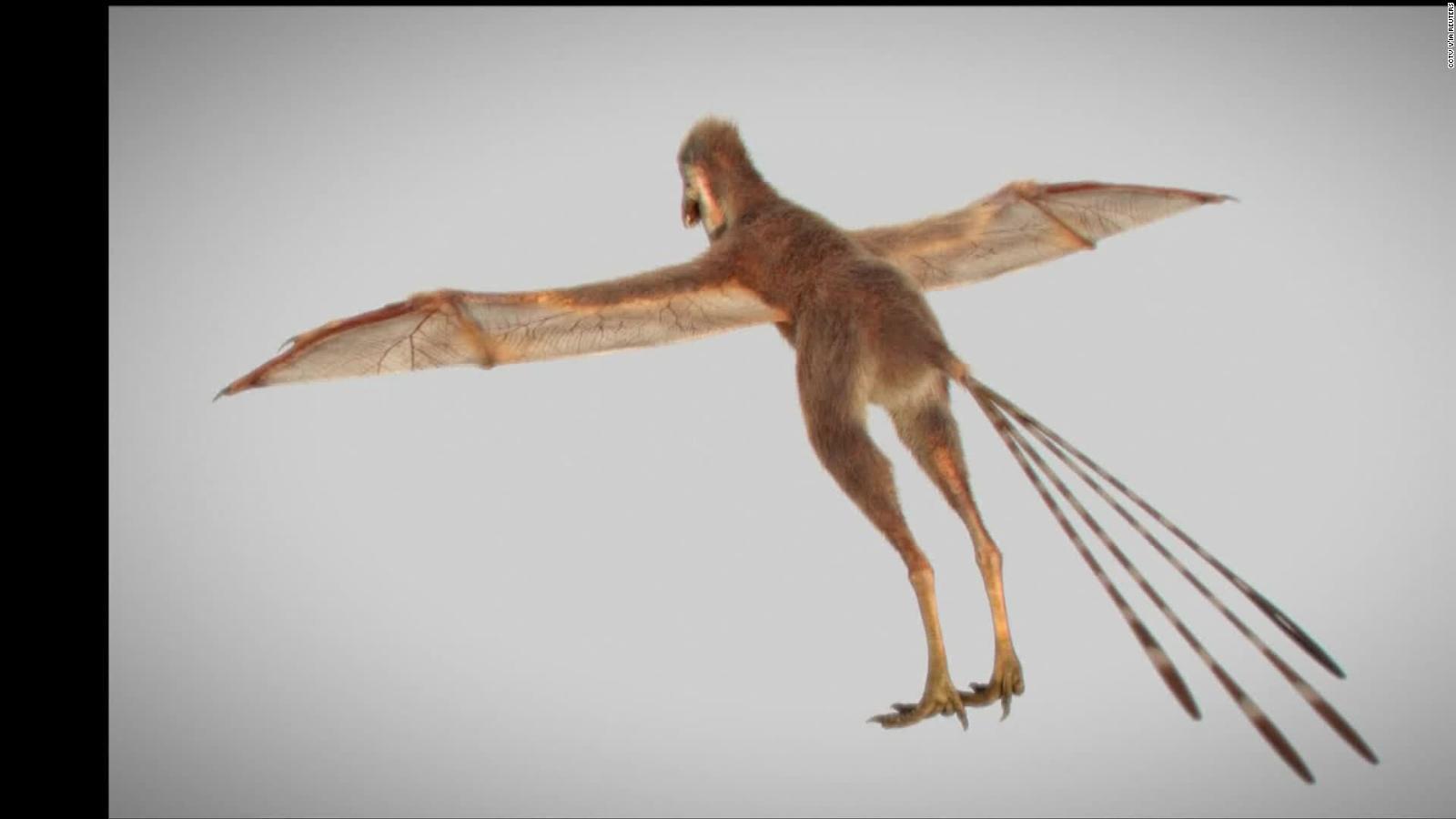 Descubren Fosiles De Dinosaurios Voladores Parecidos A Los Murcielagos Video Cnn Los pterosaurios no son dinosaurios voladores, son reptiles voladores. de dinosaurios voladores parecidos
