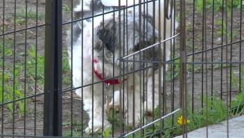 Enfermedad transmitida perros Iowa