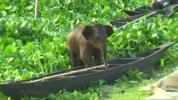 Rescatan a un elefante bebé en un lago de India