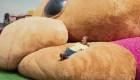 El peluche más grande del mundo