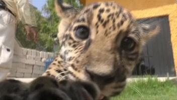 Nueva inquilina en zoológico mexicano
