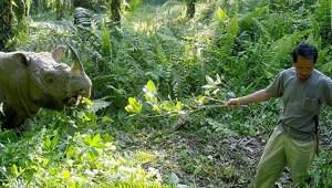 Adiós al último macho de rinoceronte de Sumatra