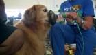 Máscaras de oxígeno para mascotas