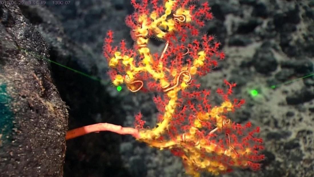 Descubren nuevas especies marinas en la Fosa de las Marianas