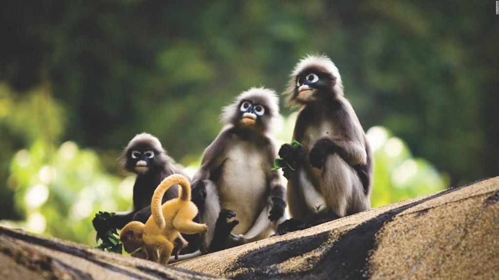Calentamiento global amenaza al 40% de los primates