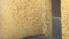 Enjambres de langostas invaden Cerdeña