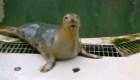 """Una foca que puede """"cantar"""""""