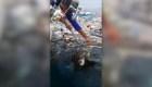 Al rescate de dos tortugas en Tailandia