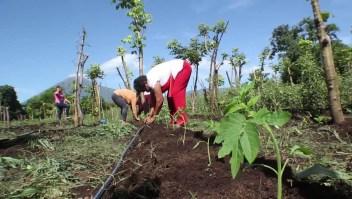 Las metas del plan Sembrando Vida en El Salvador