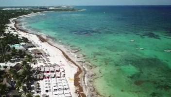 Invasión de sargazos en Cancún
