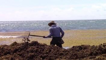 Marea de sargazos invade costas de México y el Caribe