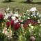 Oscar y Valeria fueron sepultados juntos en El Salvador