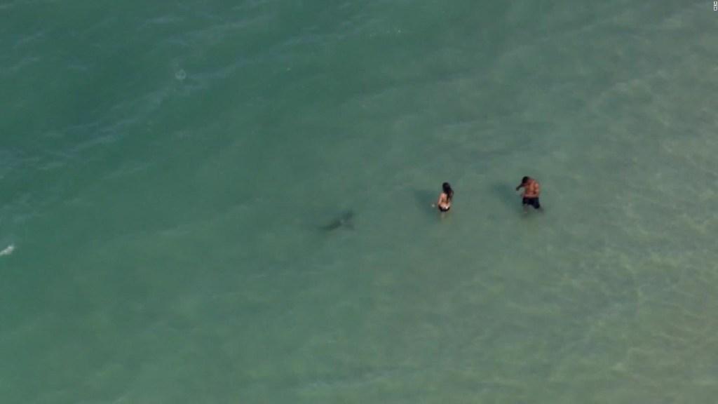 Un visitante inesperado apareció en una playa de Florida